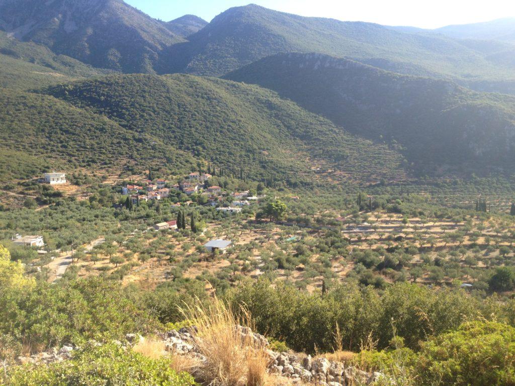 Birds eye view of an olive farm