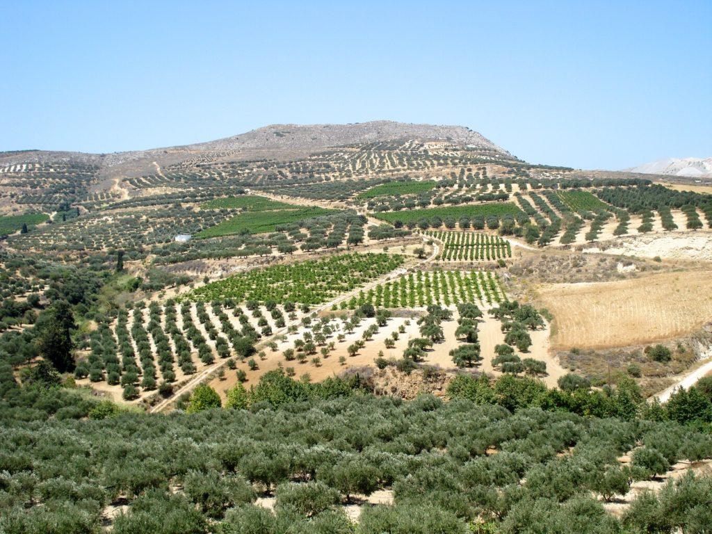 Birds eye view of olive farm
